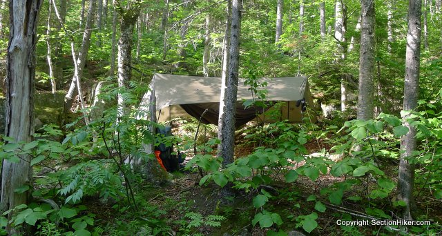 The Warbonnet Blackbird at a very stealthy campsite in the Wild River Wilderness