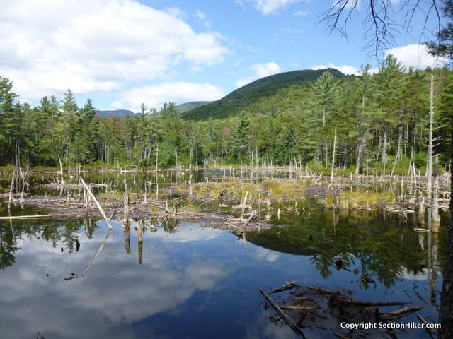 Beaver Pond near the junction of the Franconia Brook Trail and Lincoln Brook Trail
