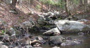 Appalachian Trail near October Mt. Shelter