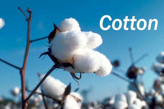 Cotton Kills
