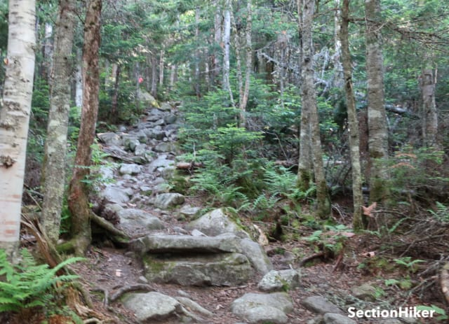 The first part of the Caps Ridge Trail is easy to follow, although it starts to climb quickly