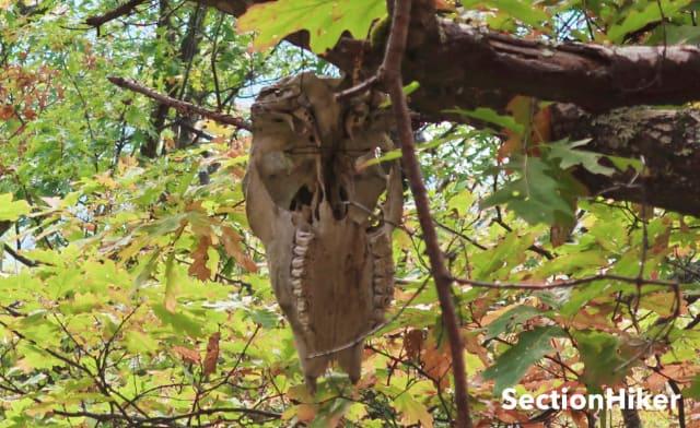 The Skull Cairn Skull