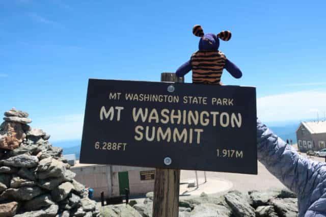 This mouse has climbed Mt Washington twice!
