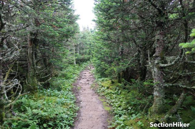 Treeline along the North Twin trail