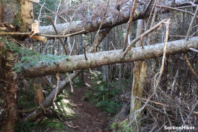 I headed west along the Kate Sleeper Trail towards East Sleeper Mountain.