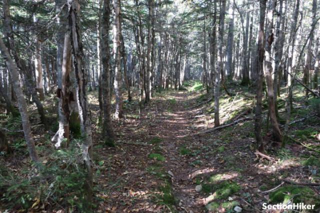 Tree cover returns west of East Sleeper