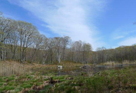 Beaver Pond at Pine Swamp Brook Lean-to